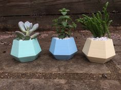 Small Planters/Succulents. Great for gifts. #3dprinted #planters