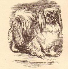 Pekingese Vintage Dog Print 1954 Megargee | eBay