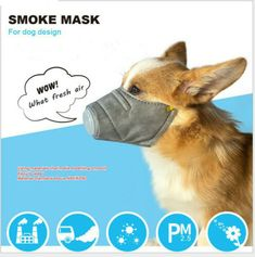 shengyuze Dog Mask, Breathable Pet Filter Anti Smoke Fog Pollution Muzzle Dog Face Mouth Mask - Grey S Smoke Mask, Dog Mask, Pet Fashion, Dog Wear, Medium Dogs, Animal Faces, Mouth Mask, Old Dogs, Dog Supplies