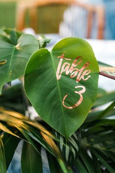 Tropical table numbe