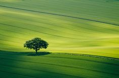 Landscape Photographer of the Year: Collection 6 - Telegraph - South Downs National Park, Hampshire, England Picture: Roger Voller / Rex Features Cool Landscapes, Beautiful Landscapes, Beautiful World, Beautiful Places, Green Fields, British Isles, Landscape Photographers, Landscape Photos, Nature Photography