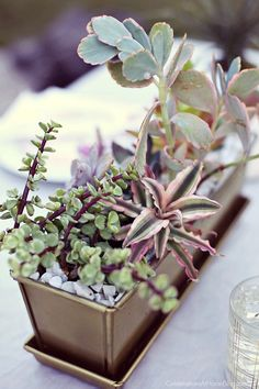Host a sunset supper party on the patio and dress the table with a succulents centerpiece. dinner party centerpiece.