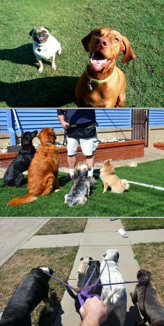 Larry Preston offers one of the best dog training services focusing on behavior modification. This provider also handles pet sitting, dog walking and canine nutrition consulting, among others.