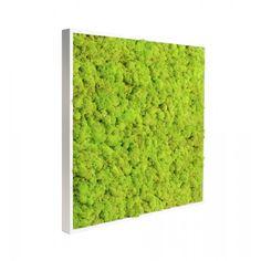 Cadre végétal stabilisé, tableau stabilisé, cadre floral stabilisé. 0% d'eau 0% de soleil 0% d'entretien & 100% naturel !