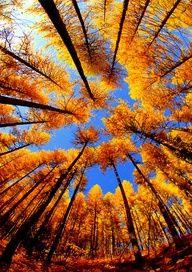 Céu de outono... amo!