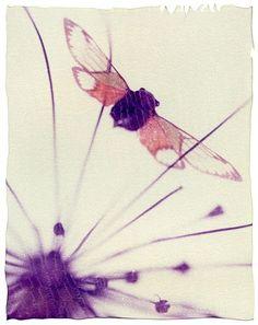 Polaroid Emulsion Lift by Corinne Heraud