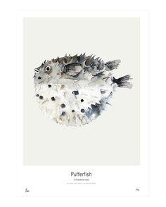 Ocean // Pufferfish