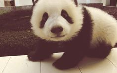 Pandas Are The Most Magical Creatures Ever