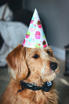 When putting together a dog birthday, you need to consider the guest list, location, theme, and food. Our guide breaks down how to choose the right mix of party details to ensure your two-legged and four-legged guests have a doggone good time! Happy Birthday, Dog Birthday, Cool Bookmarks, Grooms Party, Ballerina Party, Brown Dog, Book Launch, Party Desserts, Happy People