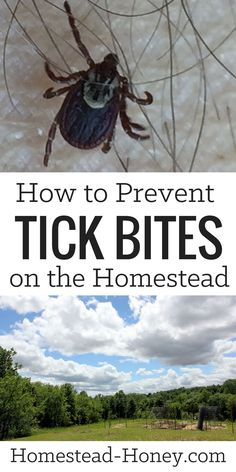Are ticks a problem on your homestead? Until we starting implementing these three easy strategies for preventing tick bites.