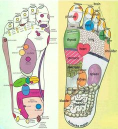 Foot Reflexology Pressure Points for massage and/or essential oils. The bottom of your feet could affect what's going on in other areas of your body. On each foot there are over 7,000 nerve endings called reflexes that correspond to every organ and system within your body. By pressing on these reflex points, you stimulate the nervous system and open energy pathways that may be blocked or congested. Essential oils added to these reflex points can also aid in correcting health issues.