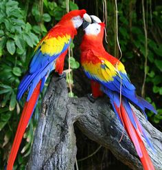 Iconic Birds to Look Out For On Your Latin America Vacation | Vacation Packages South America