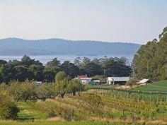 Five Bob Farm, Woodbridge: Diemen Pepper, Fleurtys Cafe and Farm Walks. Article and photo for Think Tasmania.