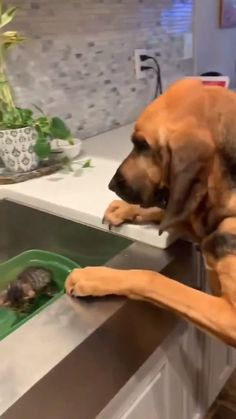 I will take good care of you, Kitty. Funny Dog Videos