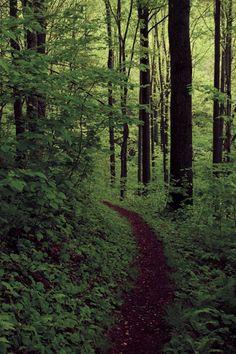 tearingdowndoors:  Lush Trail |Shahid Durrani