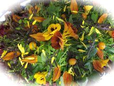 Autumn coloured salad from Maddocks Farm Organics.
