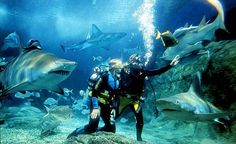 Need to swim with sharks before i die