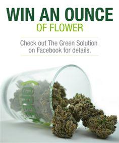 Join TGS for a killer 2013 Black Friday! www.facebook.com/thegreensolutionllc  #blackfriday #mmjdeals #coloradoweed #denverweed #denvermmj #Marijuana Weed, Black Friday, Join, Facebook, Marijuana Plants