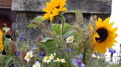 10 kvetoucích léčivek, které musíte mít na zahrádce