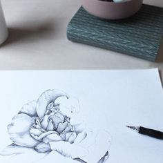 #illustration #floral #peony #ballpointpen #drawing Ballpoint Pen, Peony, Drawings, Illustration, Floral, Florals, Illustrations, Flowers, Sketch