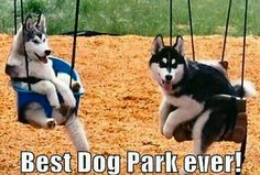 Best dog park ever! My little Kenai would love this!!