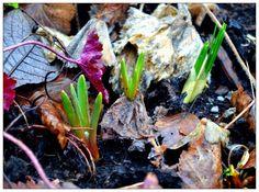 VisaLiza            : Våren tycks dröja