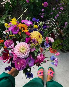 DAHLIOR, LUKTÄRT Seeds, Floral Wreath, Home And Garden, Wreaths, Flowers, Plants, Instagram, Decor, Decoration