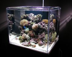 how to get a saltwater tank started