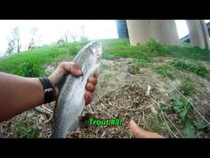 198 Best Texas Rainbow Trout Fishing images in 2019