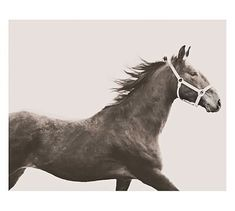 "POTTERY BARN  Vintage Horse Framed Print by Jennifer Meyers 13""   X   11""       $39 20""   X   16""       $99 42""   X   28""       $199"
