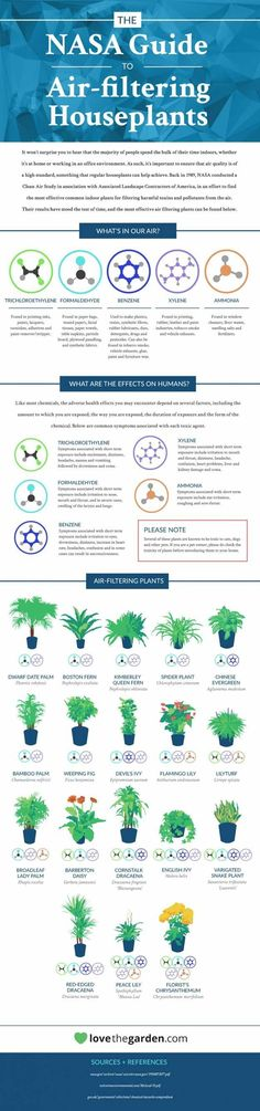 NASA's Guide to Air Purifying Plants | Filter the Air you Breath Naturally with these Must Have Plants in your Home, check it out at http://pioneersettler.com/air-purifying-plants/