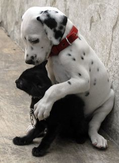 Unlikely Friendships: White Dog and Black Cat