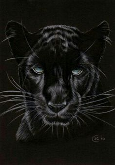 Black Panther 14 Jaguar Big Cat Pencil Painting Sandrine Curtiss Art, tattoo design maybe? Black Panther Drawing, Black Panther Cat, Black Panther Tattoo, Panther Leopard, Panther Tattoos, Jaguar Panther, Black Cats, Jaguar Tattoo, Black Panthers