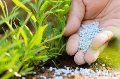 Некоторые огородники слишком буквально принимают идеи органического земледелия и поэтому отказываются от применения неорганических веществ. Но эффективность минеральных удобрений и их незаменимость в ...