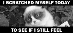 "Grumpy Cat's version of ""hurt"" by Johnny cash/NIN"