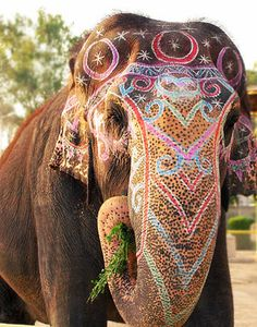 These amazingly beautiful creatures are wonderful just the way they are and with NO paint.            Painted elephants.