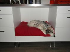 A cozy nook for the dog built in to the kitchen counter. Made with IKEA components!