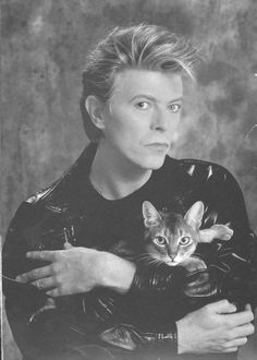Bowie and cat