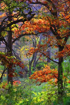 Photograph Autumn by Rocco Cafagna on 500px
