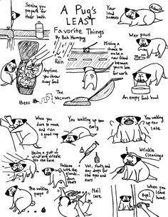 A Pug's LEAST Favorite Things