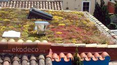 Cubierta vegetal, techo verde en vivienda aislada bioconstruida. Plants, Passive House, Green Roofs, Interior Design, Plant, Planets