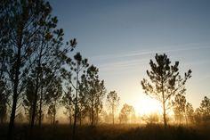 Coucher de soleil sur la forêt des Landes de Gascogne #ecotourisme #landes