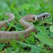 Natural remedies for keeping snakes out of your yard!