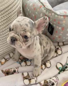 Baby Animals Super Cute, Super Cute Puppies, Cute Little Puppies, Cute Little Animals, Cute Dogs And Puppies, Cute Funny Animals, Baby Dogs, Doggies, Baby Animals Pictures