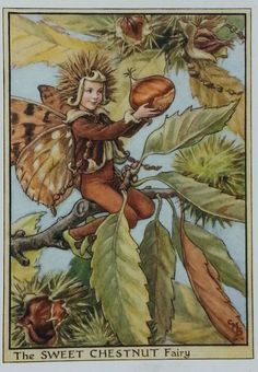 This lovely Flower Fairies Sweet Chestnut Original Vintage Print  1930s .  The tree produces chestnuts in the Autumn or Fall.  Illustrated by Cicely Mary Barker.