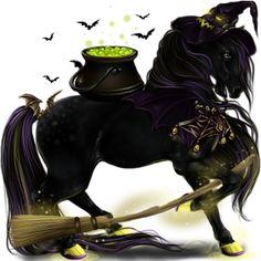 After Midnight, Pferd Andalusier Hellgrau #10190614 - Howrse