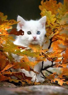 Kitten and autumn leaves