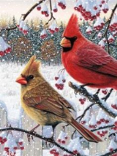 WINTER CARDINALS GIF  https://www.pinterest.com/source/mobilmusic.ru/