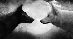 HD wallpaper: white and black wolf digital wallpaper, Moon, monochrome, artwork Background Images Wallpapers, Wallpaper Backgrounds, Wallpaper Desktop, Background Pictures, Gif Disney, Wolf Spirit Animal, White Wolf, Wolf Black, Black Moon