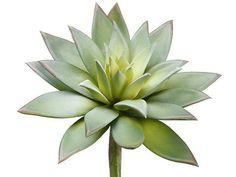 "Artificial Echeveria Succulent Pick in Grey Green<br>7"" Bloom x 9"" Tall"